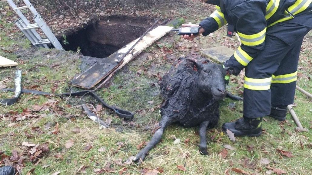 Beran spadl na Orlickoústecku do jímky, propadl se k němu i hasič