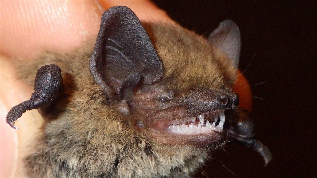 Výzkum v národním parku České Švýcarsko odhalil další dva druhy netopýrů