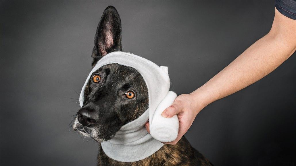 I psi někdy potřebují první pomoc. Můžete se to naučit na kurzech