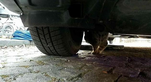 Kočka visela tři kilometry pod podvozkem auta, vyprostili ji až hasiči