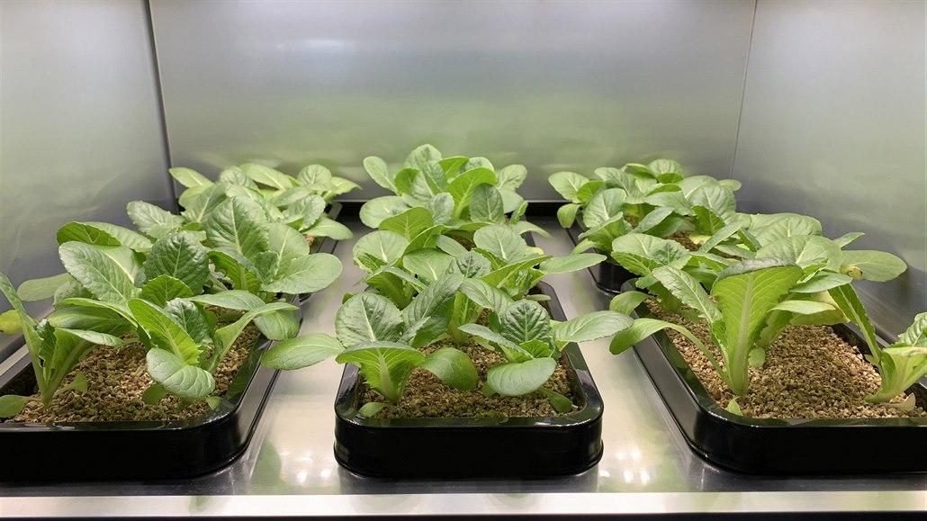 Domácí farma umožní pěstovat až 24 druhů zeleniny. Vypadá jako lednice