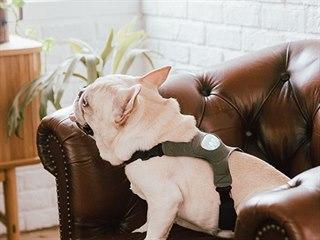 Nerozumíte psí mluvě? Speciální postroj vám pomůže.
