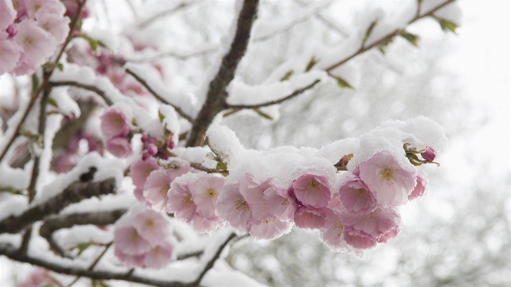 Zima vrcholí a u vás už něco kvete? Podělte se o své fotografie
