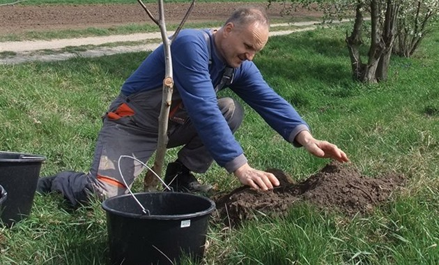 Češi sázejí stromy, za jeden věnuje stát až pět tisíc korun