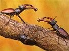 Na výstavě nechybí fotografie daného hmyzu z reálného světa. Makrofotografie...