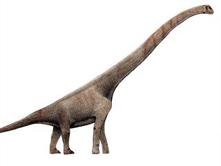 Vizualizace sauropoda Sauroposeidon proteles s naznačenými obřími krčními...