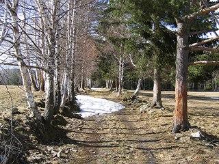 Předjarní scenérie na kraji lesa pod Milešicemi