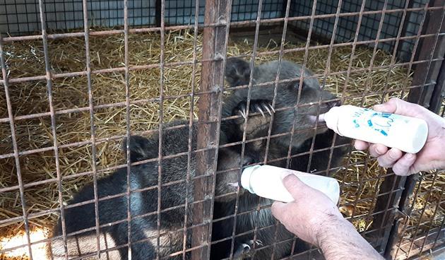 Na zavřených hranicích policisté pomohli s předáním medvíďat