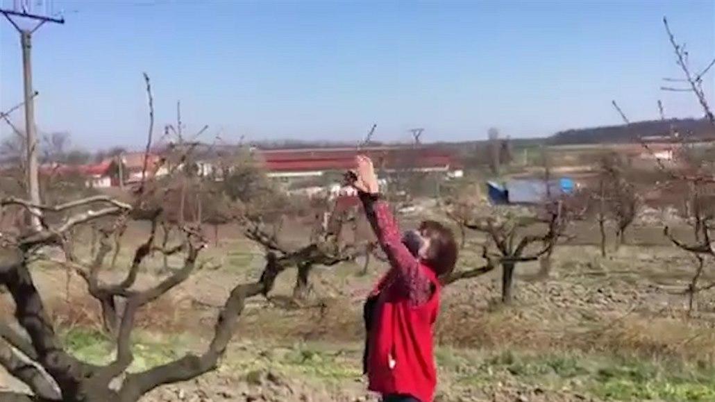 Učitelé i kuchařky pracují ve vinohradu, aby nahradili chybějící studenty
