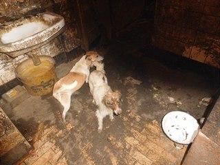 Veterináři v Přestavlkách na Chrudimsku odebrali majiteli 39 psů. Žili v...