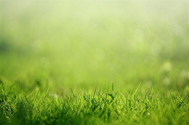 Vyživený trávník