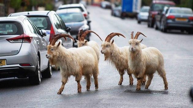zrzka má nějaké šílené přírodní kozy