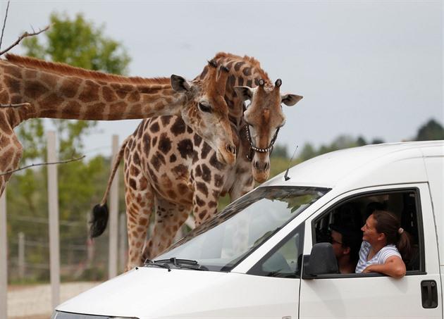 OBRAZEM: Z cirkusu safari. V Maďarsku vyzráli nad koronavirem