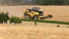 Zemědělci letos zatím čekají menší úrodu obilí i řepky. Chladné počasí zpozdilo sklizeň