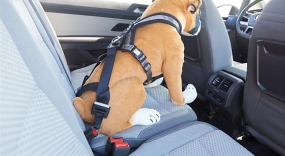 Bezpečnostní popruh pro psa
