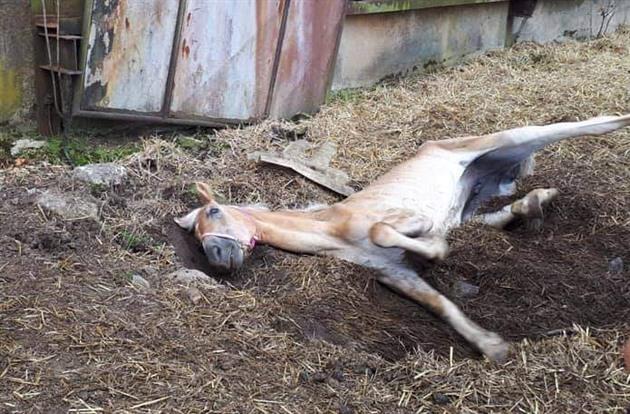 Zuboženého koně musela veterinářka utratit. Byl nemocný, tvrdí chovatelka