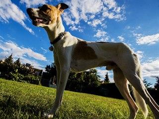 Hrdina filmu Gump - pes, který naučil lidi žít