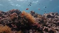 Velký bariérový útes se nestal ohroženou přírodní památkou. Jeho zapsání do UNESCO zarazila Austrálie