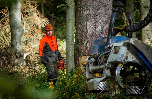 Některé stromy napadené kůrovcem kácí podél šumavských cest dřevorubci s pilami, jiné zvládne harvestor.