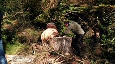 Správci NP Šumava kácejí nebezpečné stromy