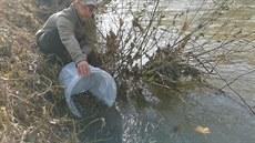 Rybáři oživili Bečvu dalšími tisícovkami ryb