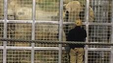 Do dvorské zoo přijela z Vídně samice slona Drumbo