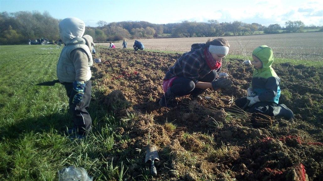 Dobrovolníci v Cholupicích vysazují stromy a keře. Vytvoří biokoridor
