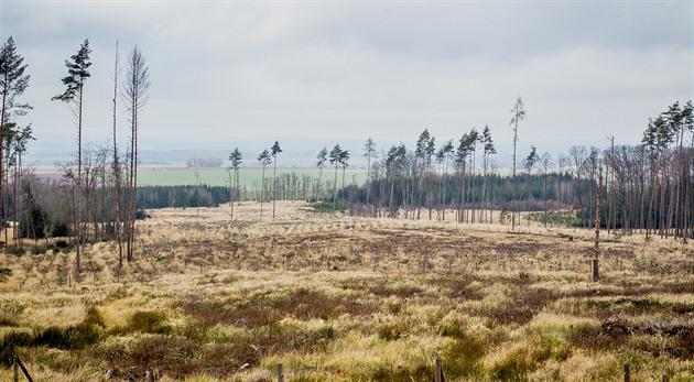 Lesy na Dačicku zničil kůrovec.