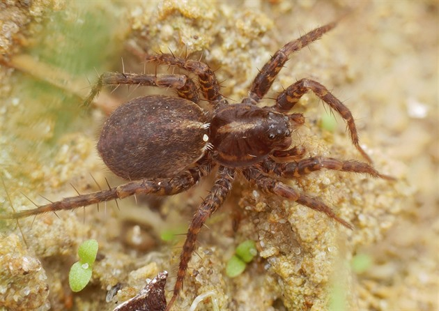 Řízené požáry v lesích mohou pomoci vzácným pavoukům, ukázal výzkum