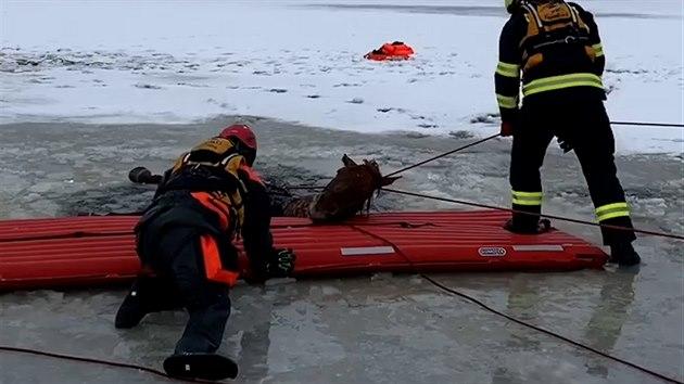 Na Lipně se pod koněm probořil led, z vody ho tahali záchranáři