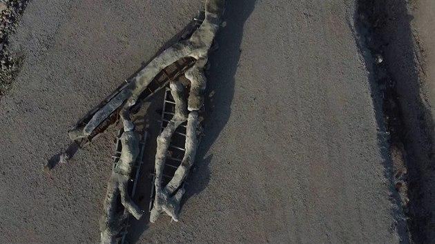 Řekové objevili zkamenělý strom, stáří odhadují na 20 milionů let