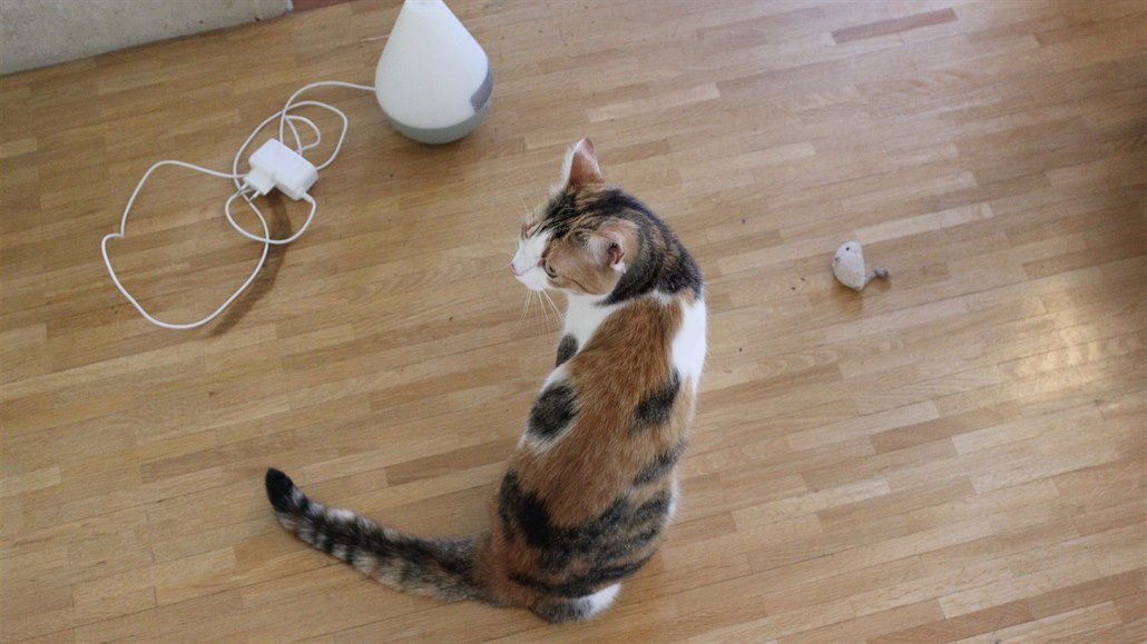 I třínohá kočka si může najít kamaráda a uštěkaného jorkšíra lze zklidnit