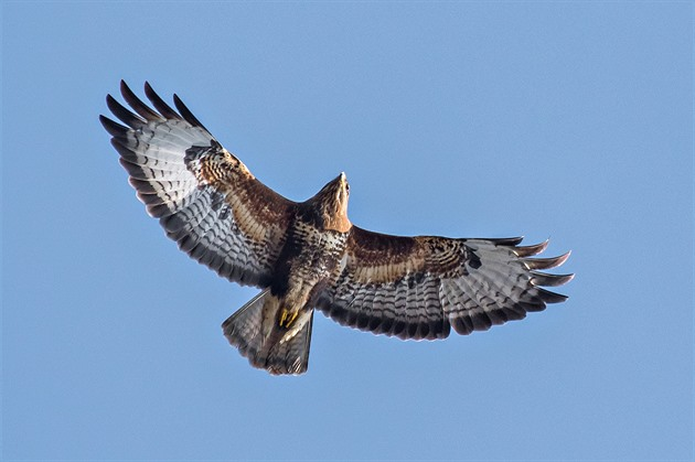 Ptačí park Josefovské louky: ochrana přírody, která funguje i bez státu