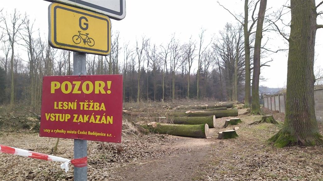 U českobudějovické Zavadilky pokáceli duby, naštvaní lidé čtyři zachránili