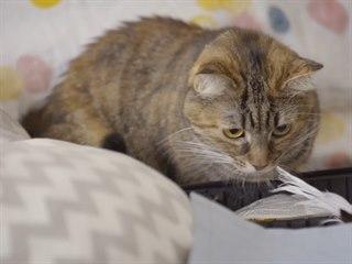 Nedůvěřivá Vinky u Klářina kufříku. Mladá kočka se pravděpodobně snaží močením...