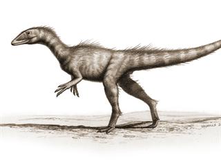 Vývojově primitivní zástupce skupiny Coelophysoidea Dracoraptor hanigani byl...
