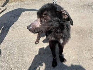 Fenka se zotavuje ve psím útulku v Klatovech. Tlamu měla přelepenou lepicí...
