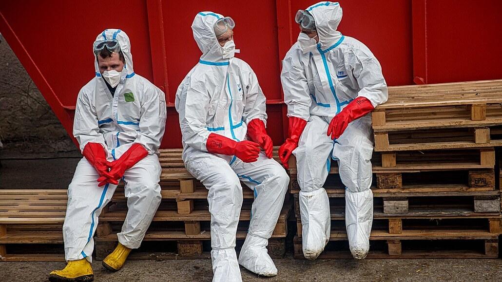 Ptačí chřipka nepolevuje, zemědělci vybili již čtvrt milionu kusů drůbeže