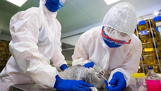 Vědci z ruské Federální veterinární a fytosanitární služby Rosselchoznadzor testují vakcínu proti covidu-19, která je určená pro zvířata. (9. prosince 2020)