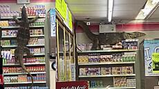 Varan vnikl do obchodu. V regálech hledal potravu