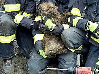 Tři jednotky hasičů zachraňovaly v Mutěnicích na Hodonínsku psa, který vběhl do...
