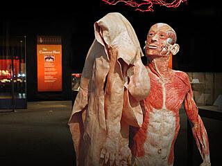 Výstava Body Worlds provede své návštěvníky celým cyklem lidského života od...