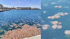 Italský přístav Terst zaplavilo obří hejno medúz