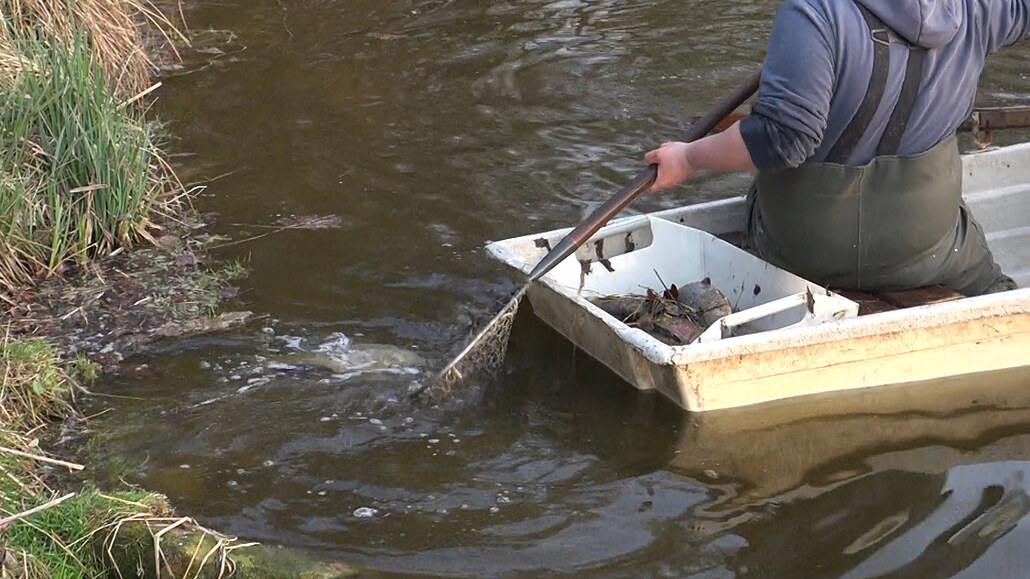 Do rybníků ve Vinoři unikla neznámá látka, kromě ryb uhynuly i žáby a nutrie