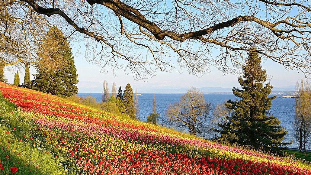Německý květinový ráj v Alpách. Na ostrově Mainau panuje středomořské klima