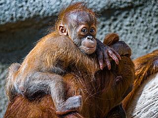 Letos už přišlo v pražské zoo na svět téměř tři sta mláďat více než osmi...