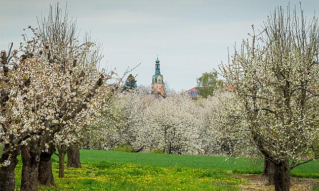 V okolí Lhenic na Prachaticku už několik dní kvetou ovocné stromy. Pozdější nástup jara by úrodu ohrozit neměl, pokud nedorazí mrazy.