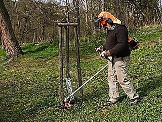 Rozrušením travního porostu dáte stromku vzduch a vodu, které se pak lépe...