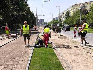 Na tramvajovou trať v Ostravě-Výškovicích dělníci pokládají travnaté koberce...