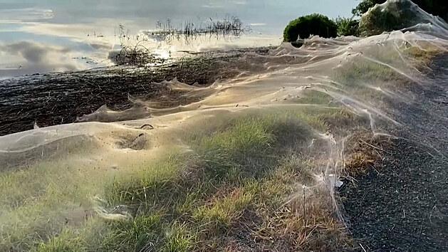 Krajina pokrytá pavučinou. Austrálii po deštích překvapily obří sítě
